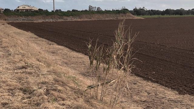 Irrorazione di erbicida (GLYPHOSATE) nei terreni del Comune di San Vincenzo
