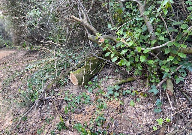 Intervento di taglio vegetazione nel Parco Costiero di Rimigliano